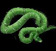 Boa Constrictor - Haut 5