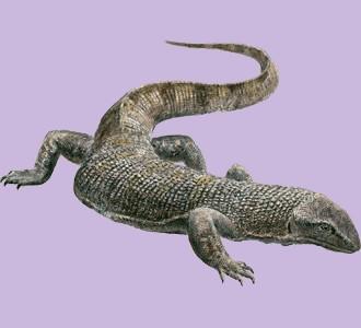 Ein Reptil von der Art waran aufnehmen