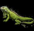 Leguan - Haut 72
