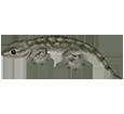 Gecko - Haut 5
