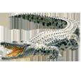 Krokodil - Haut 66